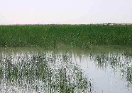 احیای تالاب هامون در گرو ایجاد اداره کل محیط زیست در سیستان